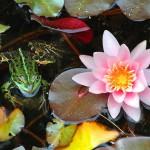 Botanischer Garten_Frosch