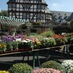 Wochenmarkt_Brandplatz